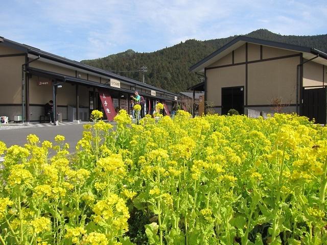 2017 滝尻~高原・牛馬童子(11).JPG
